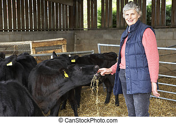 農夫, 供給, 牛, 納屋