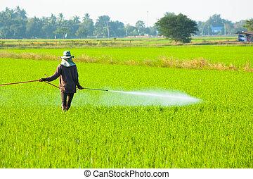 農夫, 噴射, 殺虫劑, 在, the, 稻田