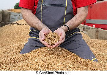 農夫, 小麦, 農業, 収穫, 収穫