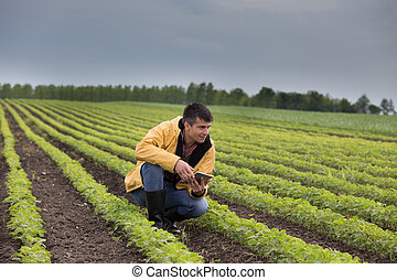 農夫, 春, タブレット, フィールド, 大豆