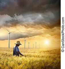 農夫, 檢查, 他的, 庄稼, ......的, 小麥