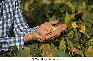 農夫, 藏品, 大豆, 手
