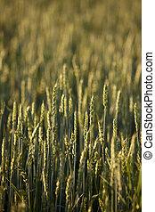 農業, フィンランド