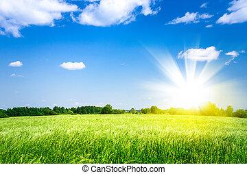農業, 上に, 日没, 緑のフィールド