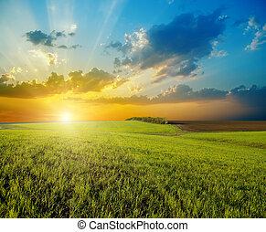 農業, 在上方, 傍晚, 綠色的領域
