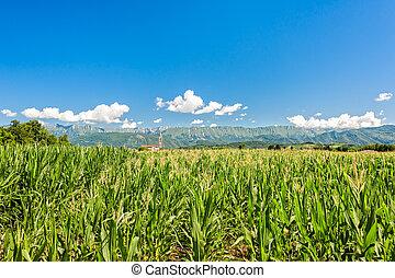 農業, 景色。