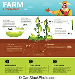 農業, infographics, eco, 味方, 有機体である, 自然, 野菜, 成長, 農場, 生産, 旗,...