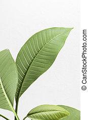 边界, 页, 角度, 绿色的树叶