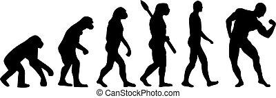 进化, 肌肉