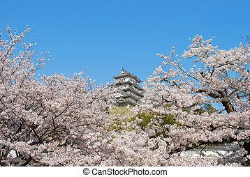 远, 樱桃, 城堡, 花, 背景