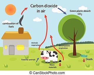 週期, 碳
