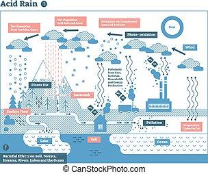 週期, 自然, 生態系, 雨, infographic, 酸, 污染