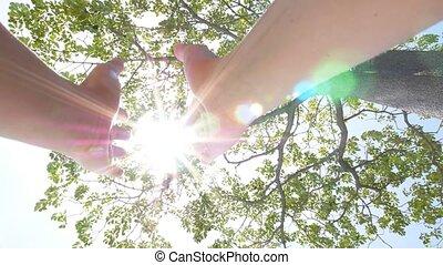 遅い, 太陽, motion., 木。, によって, 手を持つ