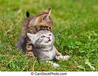 遊び好きである, 子ネコ