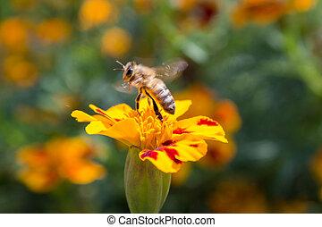 運動, 花, 蜜蜂
