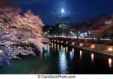 運河, sakura, biwa 湖, 夜