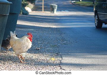 道, について, 交差点, 鶏
