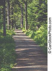 道, によって, 森林, ハイキング