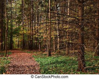 道, によって, 森林, 自然