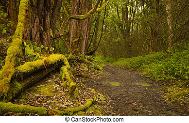 道, 中に, ∥, rainforest