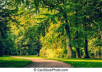 道, 公園, 木, カラフルである