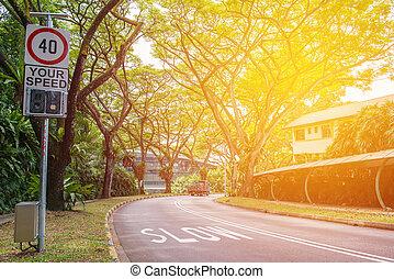 道, 曲がる, 公園, 公衆, 木
