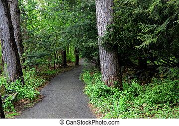 道, 歩くこと, によって, 森林
