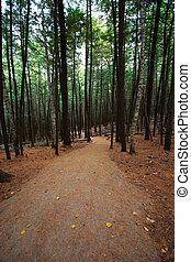 道, 歩くこと, 森, によって, ハイキング