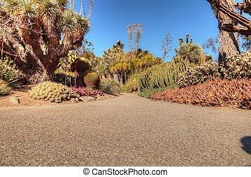 道, 砂漠, 庭