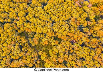 道, 秋, 光景, 見なさい, 上, 明るい, 木, ハイキング, 。, 航空写真, 黄色, 公園