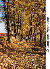 道, 秋, 歩きなさい