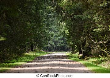 道, 空, 森林, 長い間, 見通し