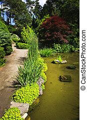 道, 美化される, 庭, 池