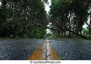 道, 落ちた, 壊される, によって, 後で, went, 下方に, 木, 嵐, 強い