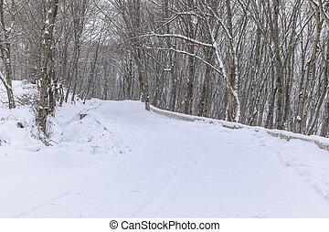 道, 雪が覆われる, によって, 森林
