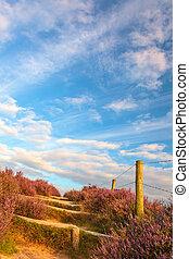 道, heathland, ハイキング, 咲く