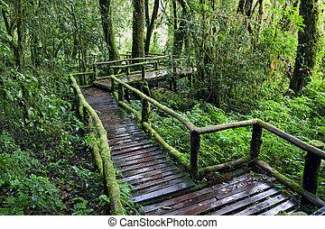 道, rainforest., 自然