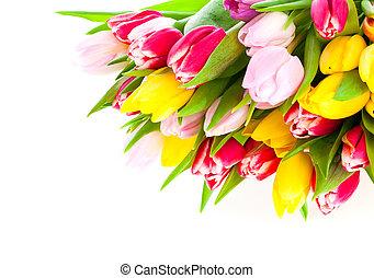 郁金香, 白色, 被隔离, 鮮艷, 花