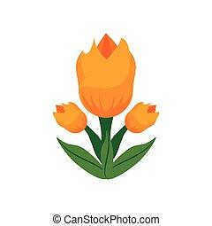 郁金香, 花, 春天, 圖像