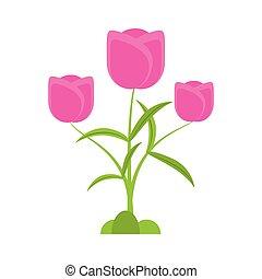 郁金香, 花, 浪漫, 植物