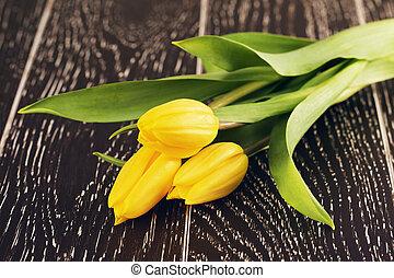 郁金香, 花, 黃色
