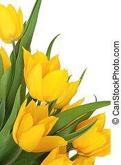 郁金香, 花, 黃色, 美麗