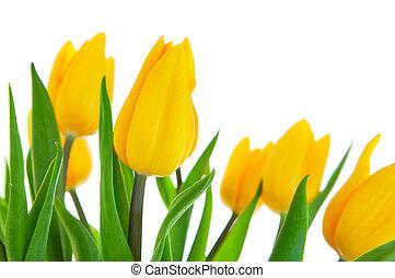 郁金香, 離開, 花, 綠色, 黃色