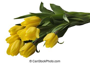 郁金香, 黃色, 花束