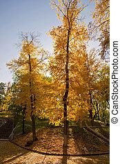 都市, ∥ない∥, 風景, 木, 秋, park., 黄色, オレンジ, scene.