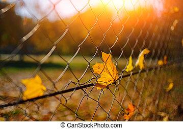都市, ワイヤー, 葉, フェンス, net-shaped, の上, 金属, 秋, スタックした, 背景, ぼやけ, それ, 終わり