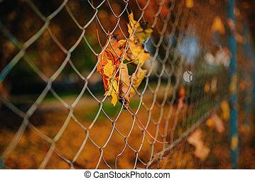 都市, ワイヤー, 葉, フェンス, stucked, の上, 金属, 秋, net-shaped, 背景, ぼやけ, それ, 終わり