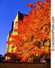 都市 公園, 木, 秋, 秋, かえで