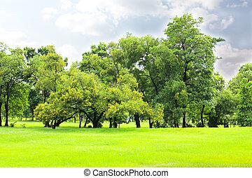 都市 公園, 緑