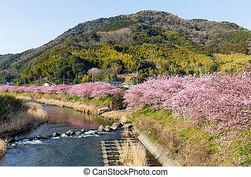 都市, 日本語, sakura
